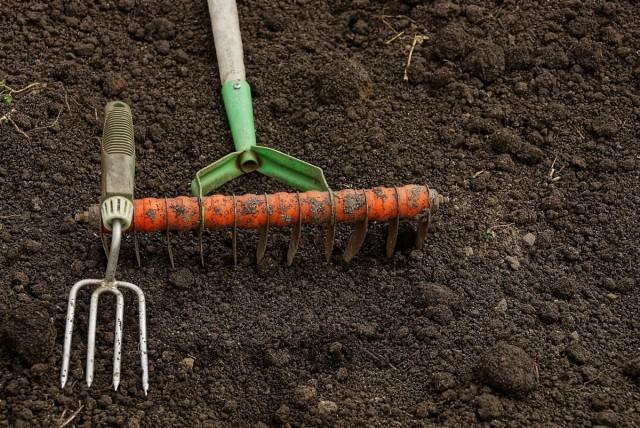 Место под подзимний посев цветов должно быть тщательно очищено от многолетних сорняков, иначе по весне они «забьют» нежные всходы