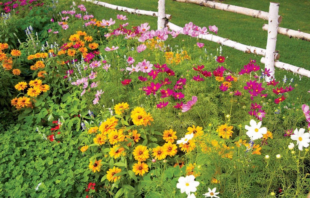 Сеять семена цветов в зиму