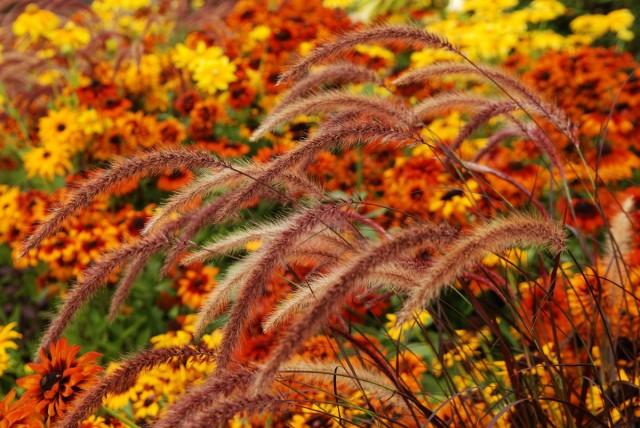 10 самых ярких осенних цветов