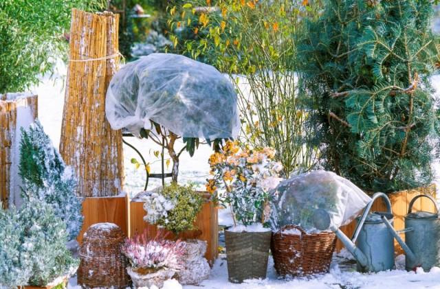 Контейнерные растения лучше собрать вместе и устроить им общее укрытие