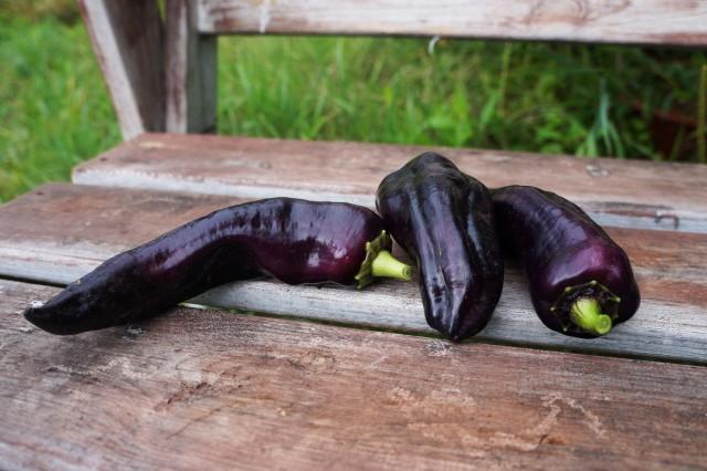 Перец «Маркони фиолетовый» (Marconi Purple)