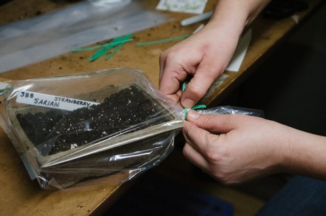 Проверяйте заложенные на стратификацию семена регулярно, раз в 2 недели