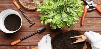 Разные растения в естественных условиях растут в разных по составу грунтах