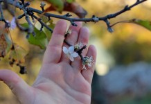 Осеннее цветение растений