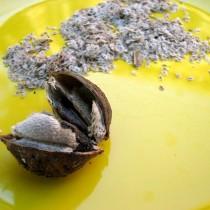 Внутри семенной коробочки павловнии огромное количество мелких семян (1-2 тысячи)