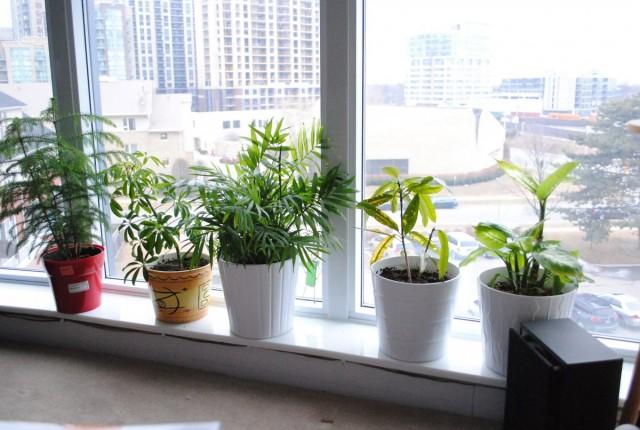 В изменении ухода в зимний период, в большей или меньшей мере, нуждаются все комнатные растения