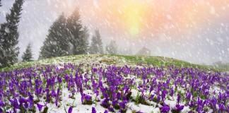 Какие бывают зоны морозостойкости растений?