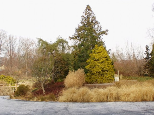 После начала листопада древесные растения постепенно погружаются в «сон», когда им необходимо пройти закаливание при низких температурах