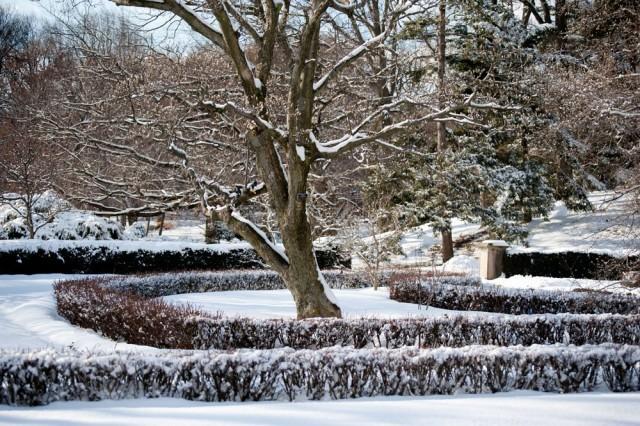 Разные части одного дерева имеют разную зимостойкость