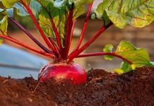 Многие культуры чувствительны к повышенной кислотности почвы