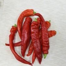 Перец острый «Красный толстяк»