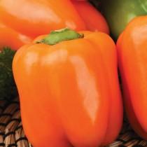 Перец сладкий «Оранжевый бочонок»