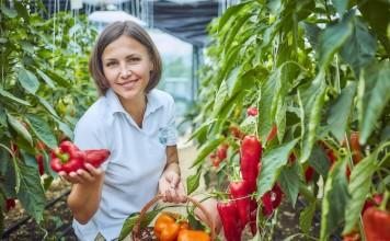 Ежедневное употребление в пищу всего нескольких плодов перца способно удовлетворить суточную потребность в основных витаминах