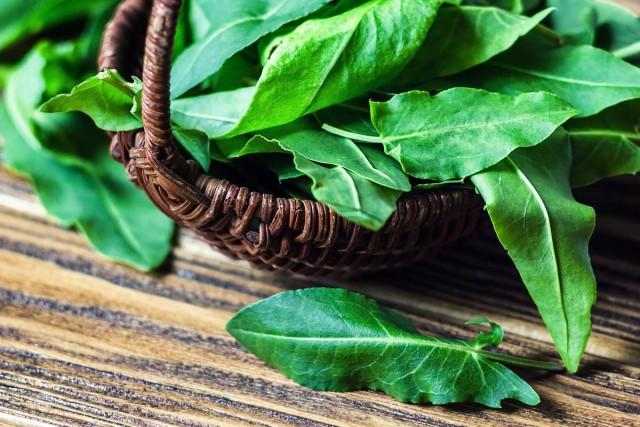 Щавель — особенности выращивания и лучшие сорта витаминной зелени