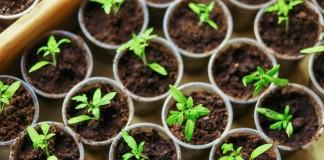 11 ответов на главные вопросы о рассаде