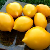 Томат «Цитрусовый сад»