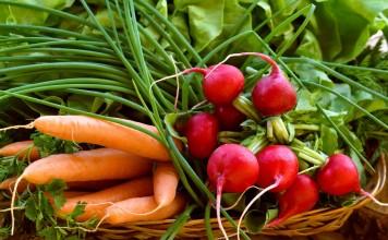 9 овощей для «быстрого» урожая