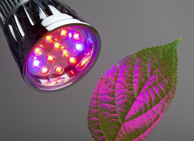 Самыми эффективными для полноценного развития растений являются показатели 660 нм (видимый человеком, как синий свет) и 455 нм (красный)