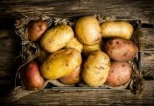 Почему гниёт картофель при хранении, и как этого избежать?
