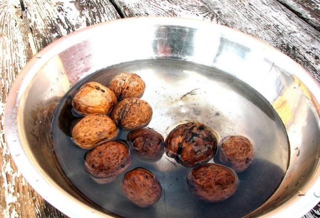 Тонкокорые орехи перед стратификацией на 5-7 дней замачивают в воде