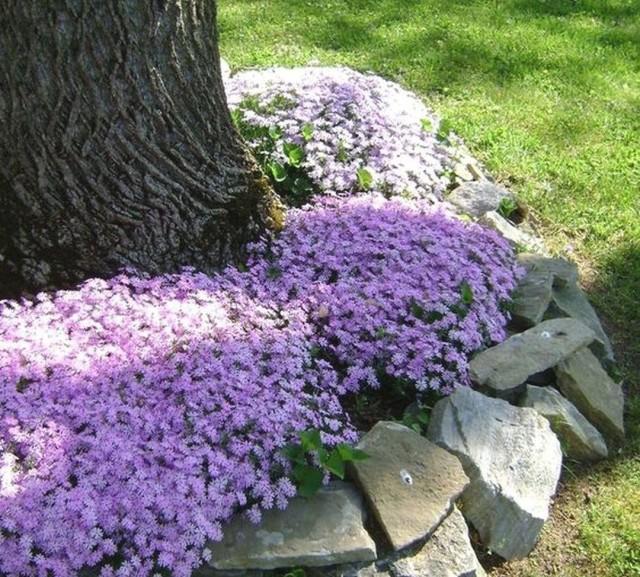 Период декоративности моноцветника ограничен периодом цветения или вегетации растения