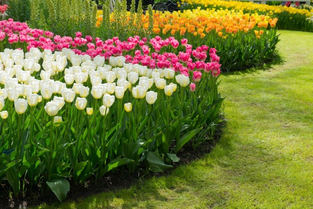 Моноцветники - элемент оформления преимущественно регулярного сада
