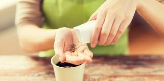 Заказ семян онлайн — плюсы и минусы покупок в Интернете