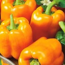 Перец сладкий, гибрид «Оранжевое чудо F1»