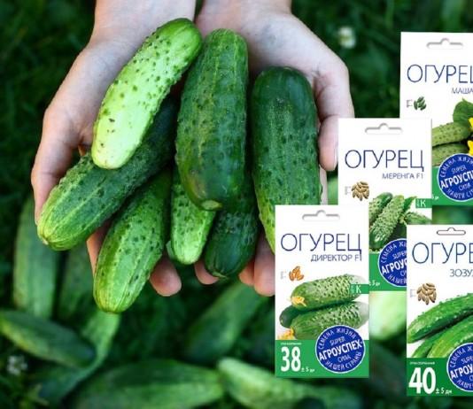 Лучшие гибриды, по мнению покупателей семян «Агроуспех»