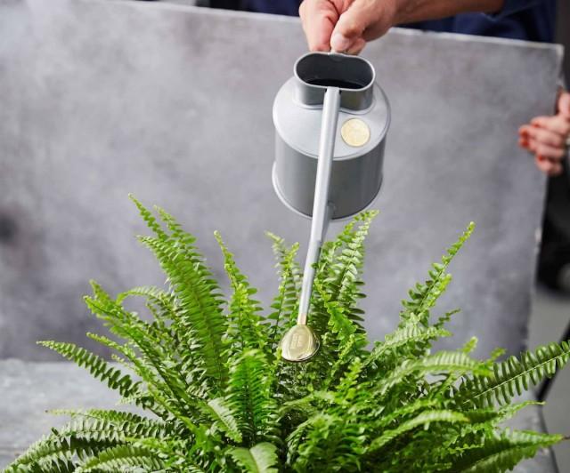 Пробуждающимся растениям потребуются увеличенные поливы, но делать это лучше постепенно