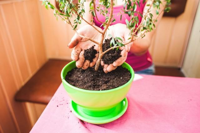 7 грехов, которые вам не простят комнатные растения