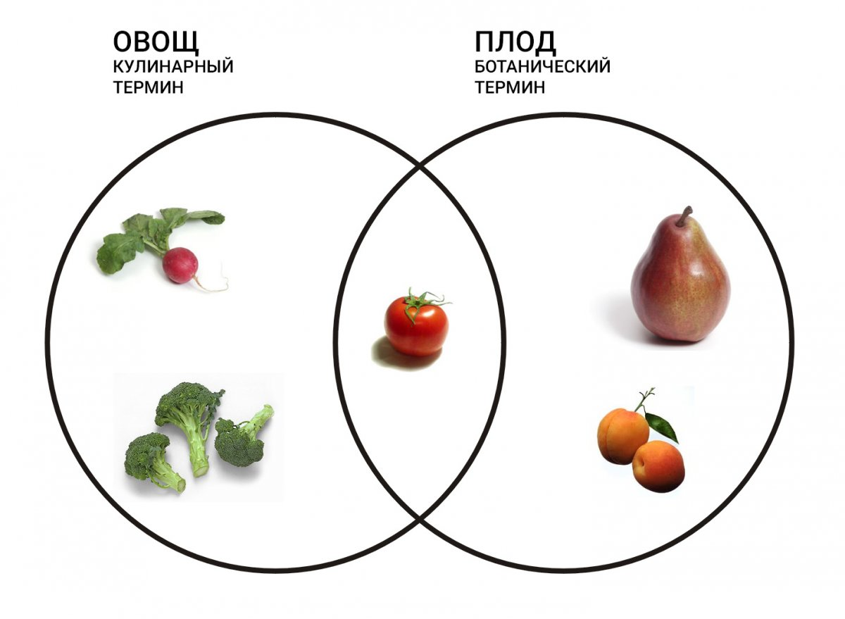 Botanical_Fruit_and_Culinary_Vegetables