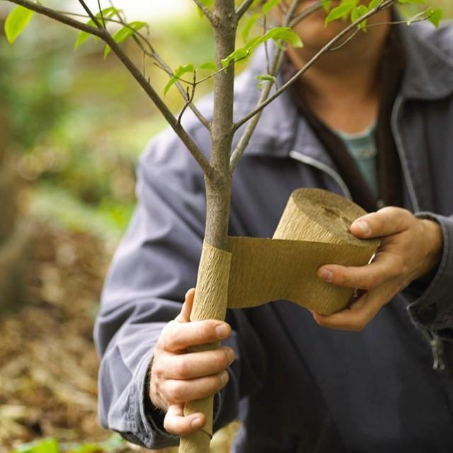 Вместо побелки можно использовать специальные садовые или сделанные своими руками бинты