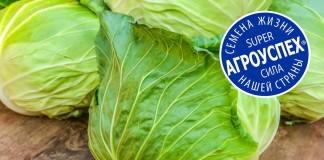 Обзор лучших сортов белокочанной капусты ТМ «Агроуспех»