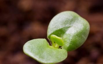 Почва, богатая питательными элементами, поддержит молодые растения на самом ответственном этапе развития!