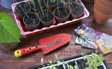 Как выбрать семена цветов и не стать жертвой обмана?