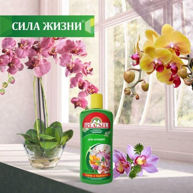Удобрение «Reasil® для орхидей»