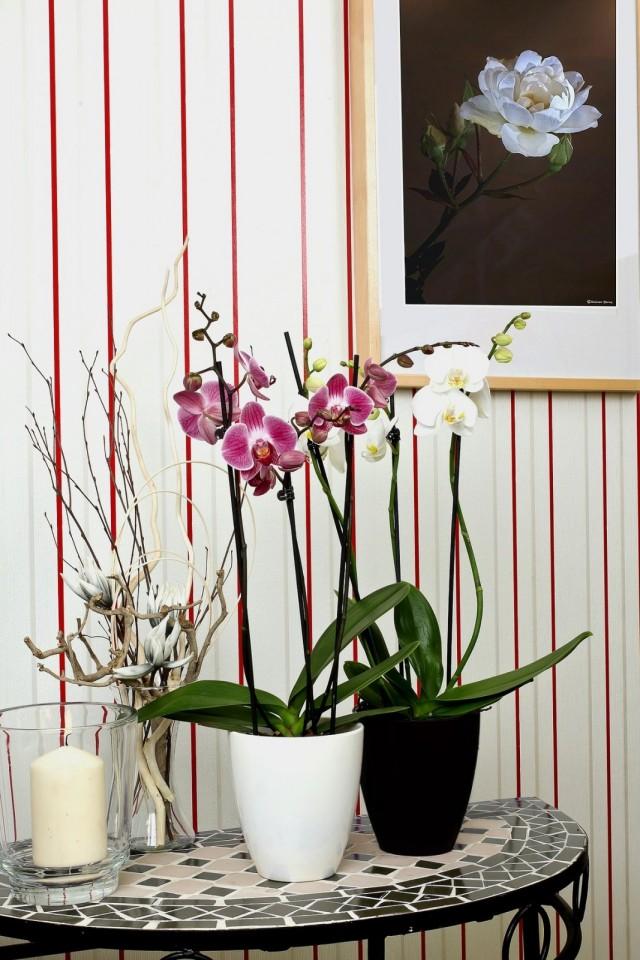 Изысканные цветы и ухода требуют особого, грамотной подкормки и правильного полива