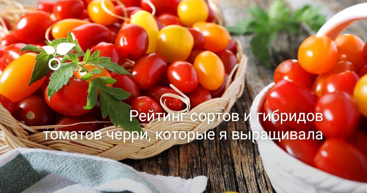 Описание и урожайность сорта томата Черри Негро