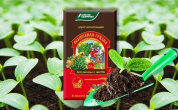 С землей с участка можно занести различные болезни и вредителей растений, что отрицательно скажется на качестве рассады