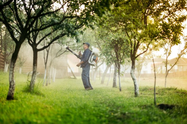 4 обязательных весенних обработки сада от болезней и вредителей