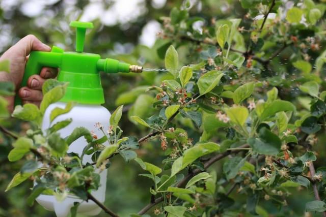 Четвёртое весенне опрыскивание сада — после цветения
