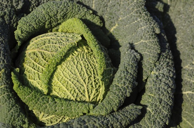 5 необычных видов капусты, которые нужно обязательно выращивать