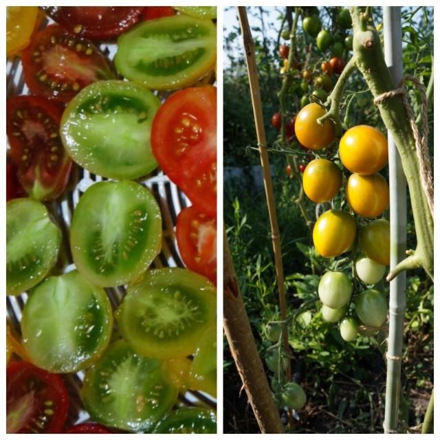 Помидор черри «Зеленый виноград» (Green Grape)
