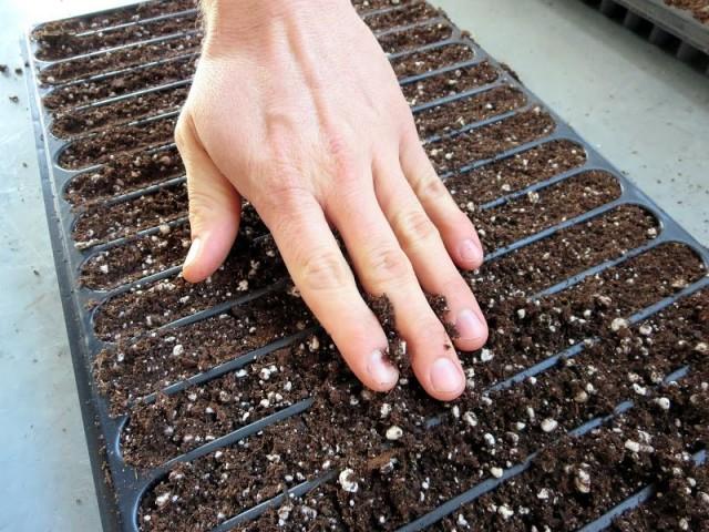 Высев семян в бороздки и засыпание землей подходит только культурам с крупными и средними семенами