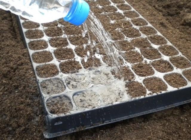 Использование огородной земли в чистом виде для посева цветов могут привести к печальным последствиям