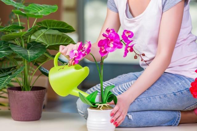 Для орхидеи изначально нужно постараться создать приемлемые для роста и развития условия