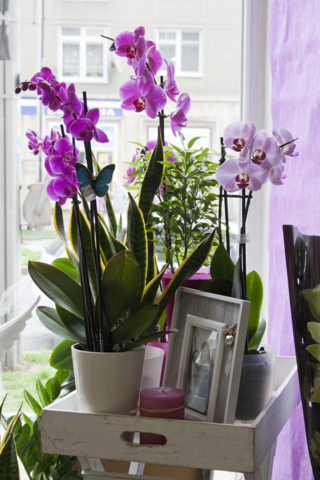 Очень важно в уходе за орхидеями обеспечить им постоянное место в доме