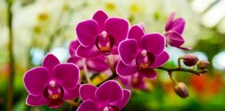 Орхидее необходимо обеспечить правильные условия и уход