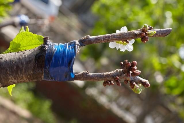 Можно создать дерево-сад и на взрослом растении, если по каким-то причинам оно вас не удовлетворяет